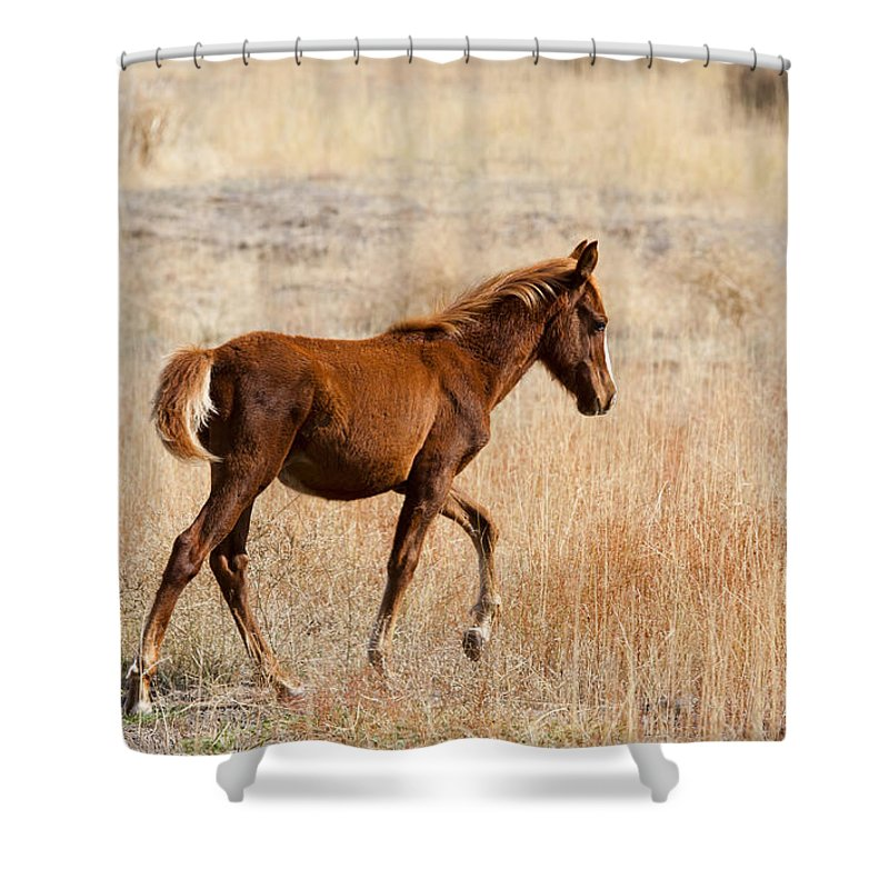 Mustang Shower Curtain featuring the photograph High Stepping by Mike Dawson