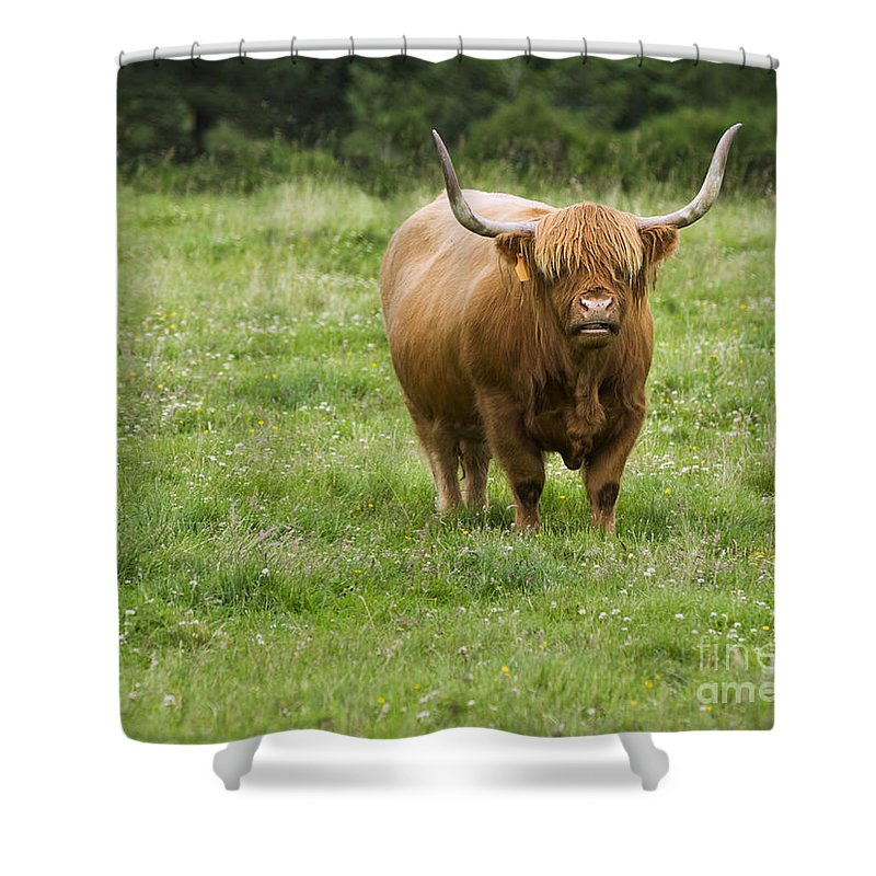 Highland Cattle Shower Curtain featuring the photograph Highland Cattle by Diane Diederich