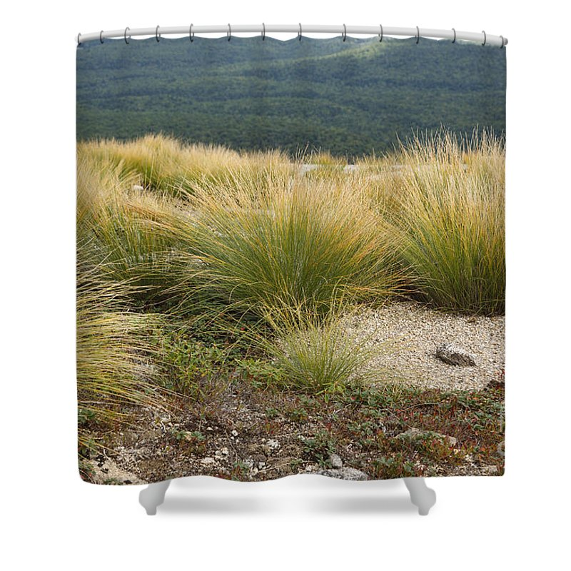 Subalpine Dwarf Shrubland Shower Curtain featuring the photograph Highland Rush - White Mountains New Hampshire Usa by Erin Paul Donovan