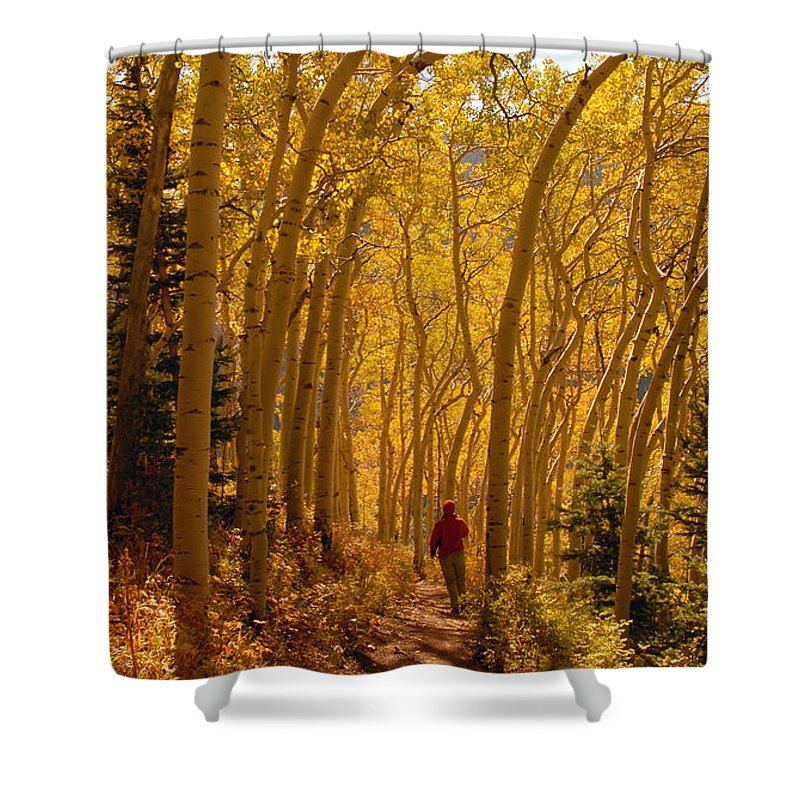 Fall Shower Curtain featuring the photograph Hiking In Fall Aspens by David Lee Thompson