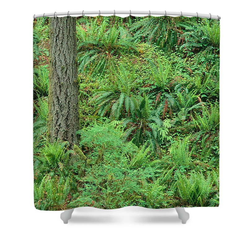 Brush Shower Curtain featuring the photograph Hillside Ferns by Greg Vaughn - Printscapes