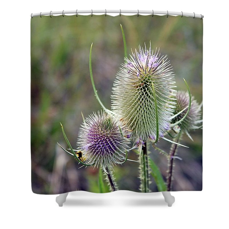 Flower Shower Curtain featuring the photograph Hint Of Violet by Amelia Saldarriaga