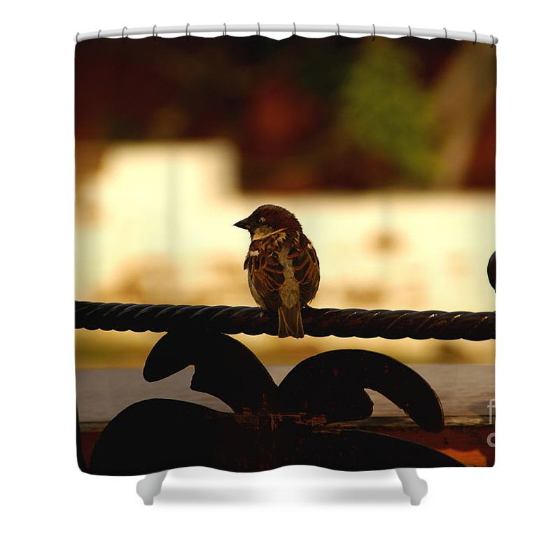 Bird Shower Curtain featuring the photograph His Eye Is On The Sparrow by Linda Shafer