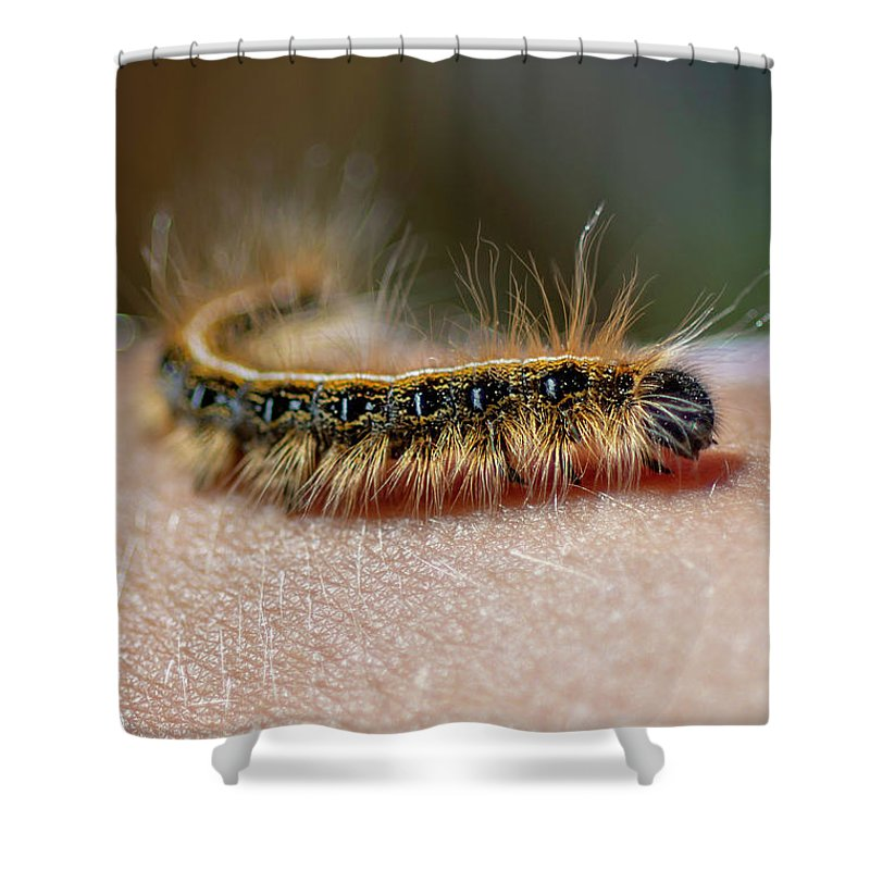 Caterpillar Shower Curtain featuring the photograph Hitch Hiker by Keith Smith