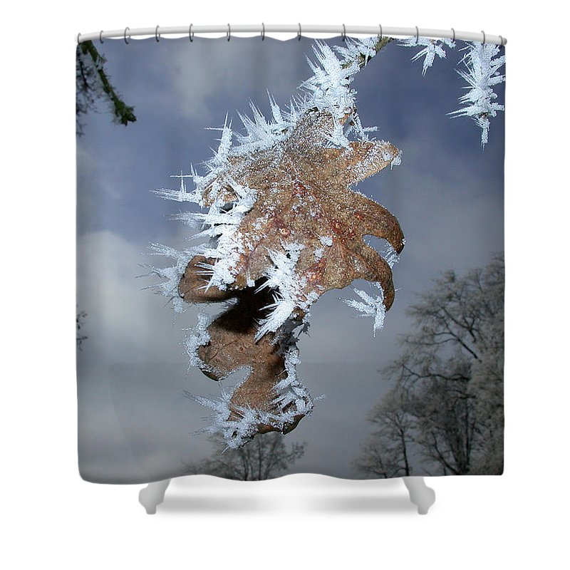 Oak Shower Curtain featuring the photograph Hoarfrost On Oak Leaves by Patricia Whitaker