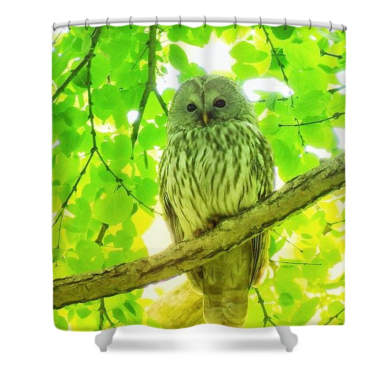 Hokkaido Fral Owal Shower Curtain featuring the photograph Owl by Yutaka Mori