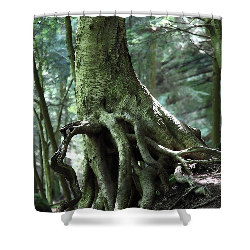 Trees Shower Curtain featuring the photograph Hold On To Me. by Amanda Barcon