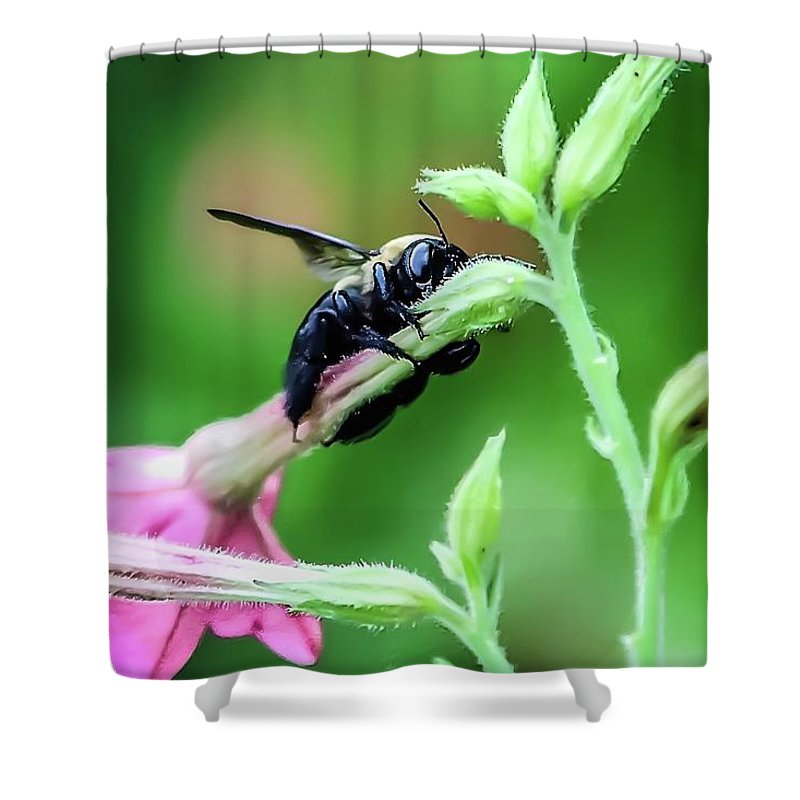 Bee Shower Curtain featuring the photograph Hold On by Tonya Peters