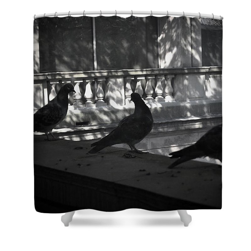 Birds Shower Curtain featuring the photograph Holding Court by Tim Nyberg