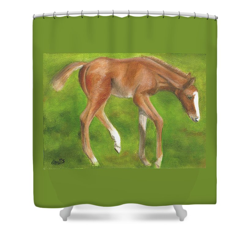 Horse Paintings Shower Curtain featuring the painting Holly by Deborah Butts