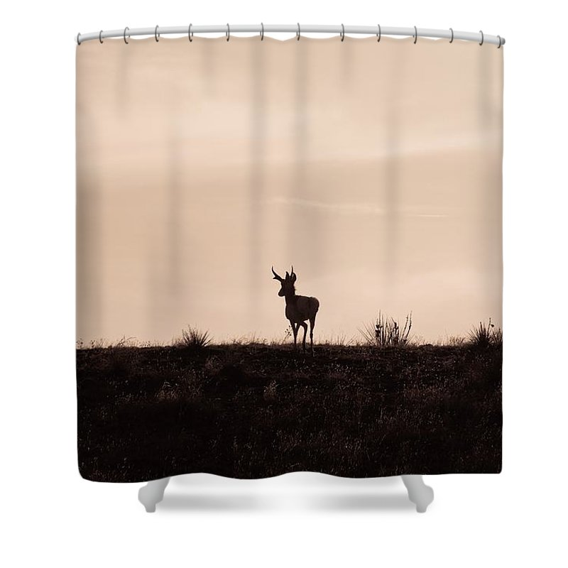 Animals Shower Curtain featuring the photograph Home On The Range by Ernie Echols