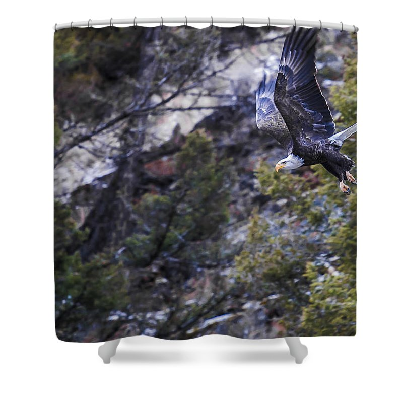 Eagle Shower Curtain featuring the photograph Homeward by Tyler Mcbride