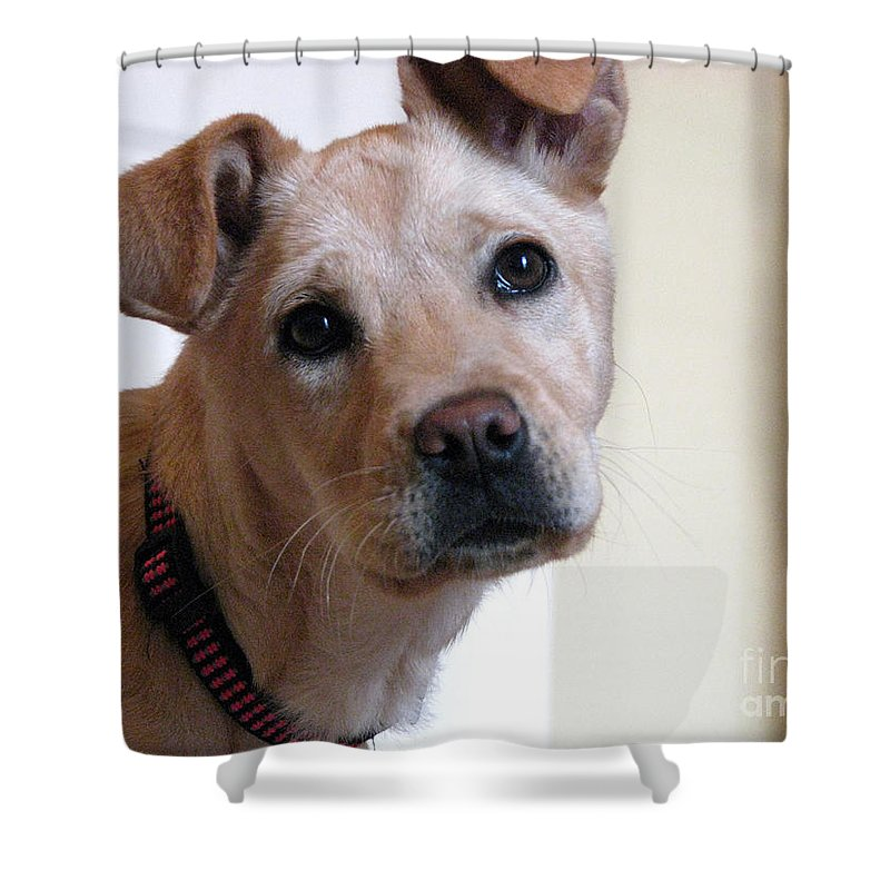 Dog Shower Curtain featuring the photograph Honey by Amanda Barcon