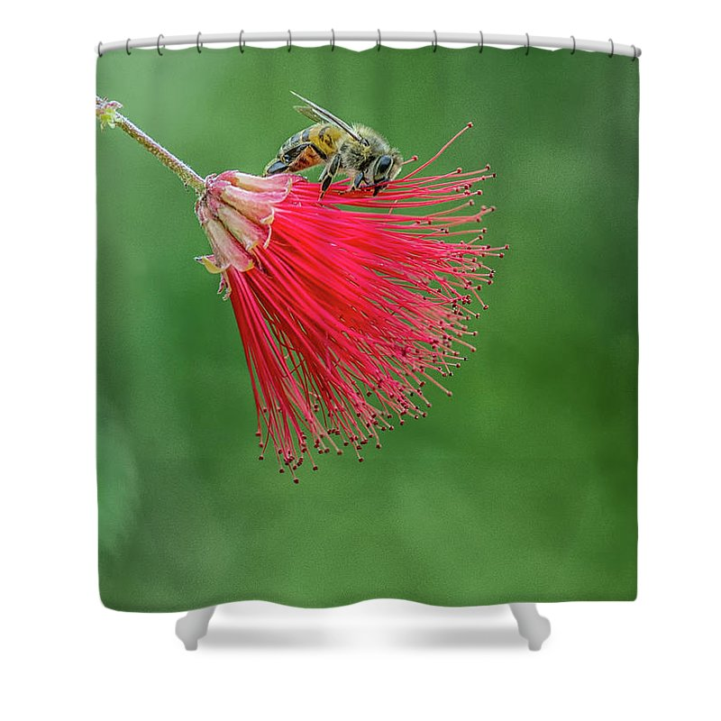 Bee Shower Curtain featuring the photograph Honey Bee by Tam Ryan