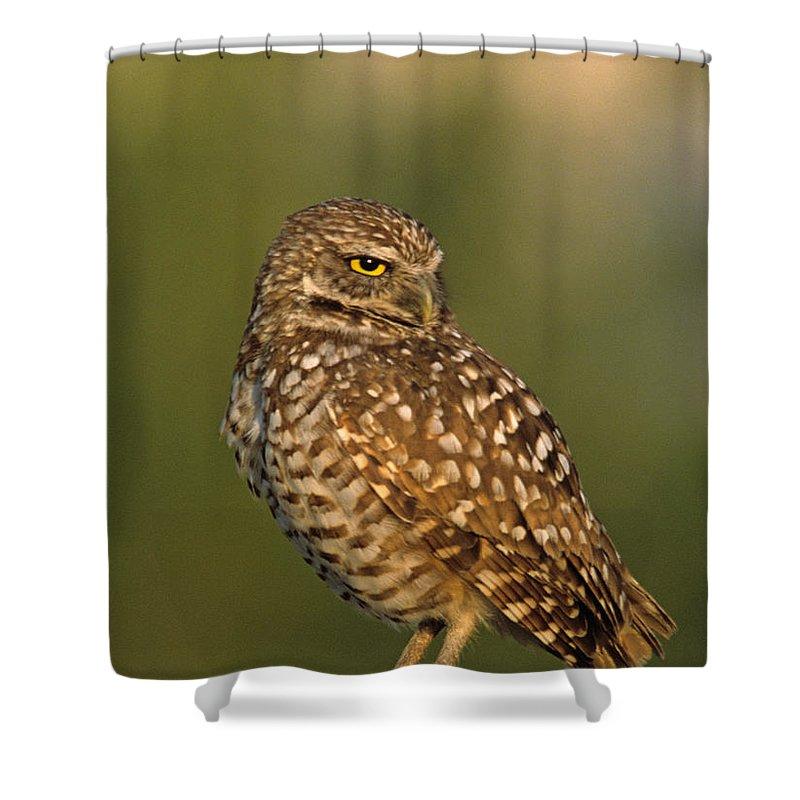 Bird Shower Curtain featuring the photograph Hoot A Burrowing Owl Portrait by John Harmon