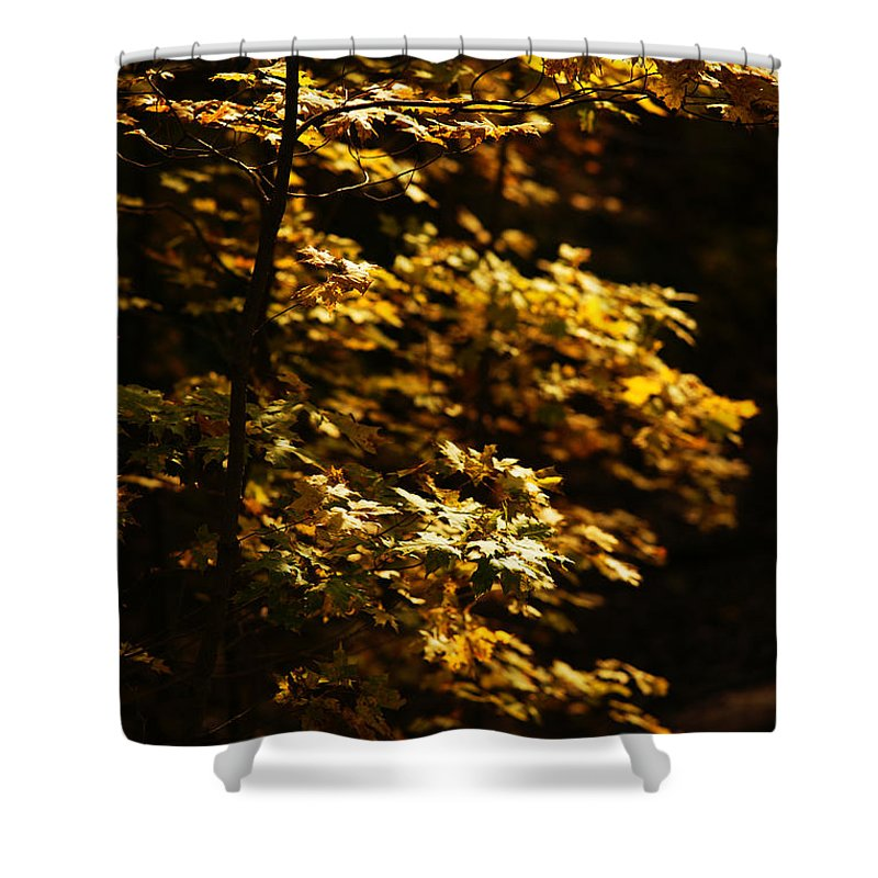 Autumn Shower Curtain featuring the photograph Hope Leaves by Linda Shafer