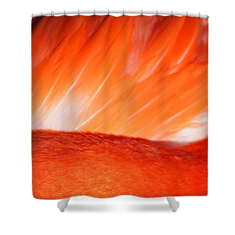 Flamingo Shower Curtain featuring the photograph Hope by Mitch Cat