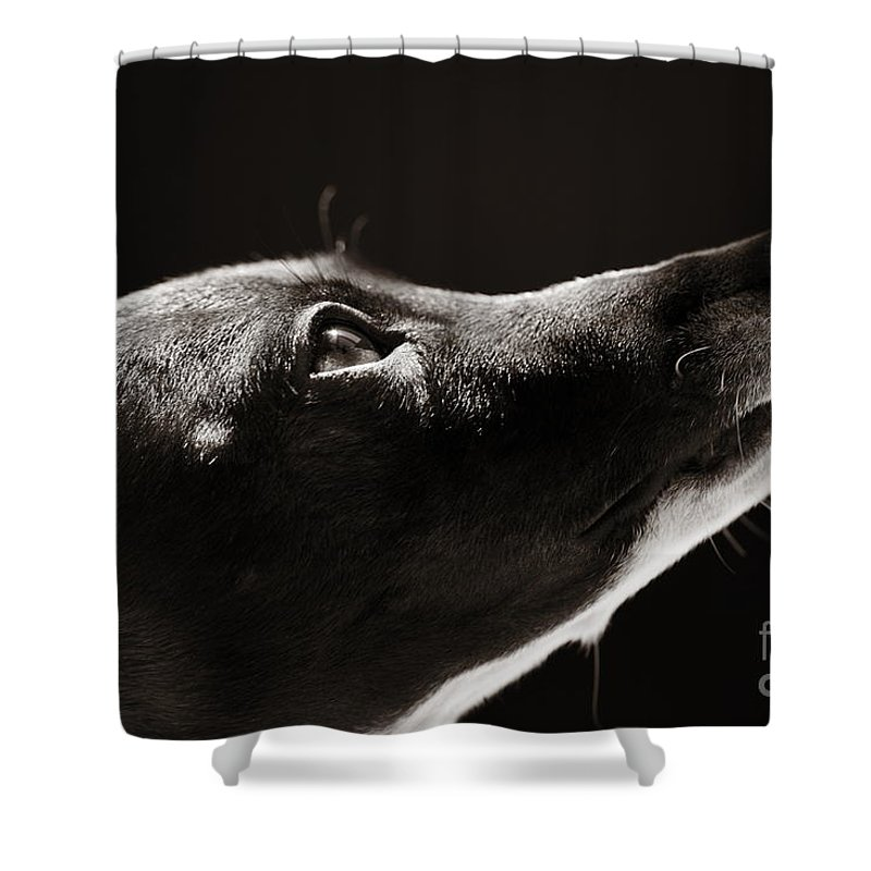 Peaceful Shower Curtain featuring the photograph Hopeful by Angela Rath