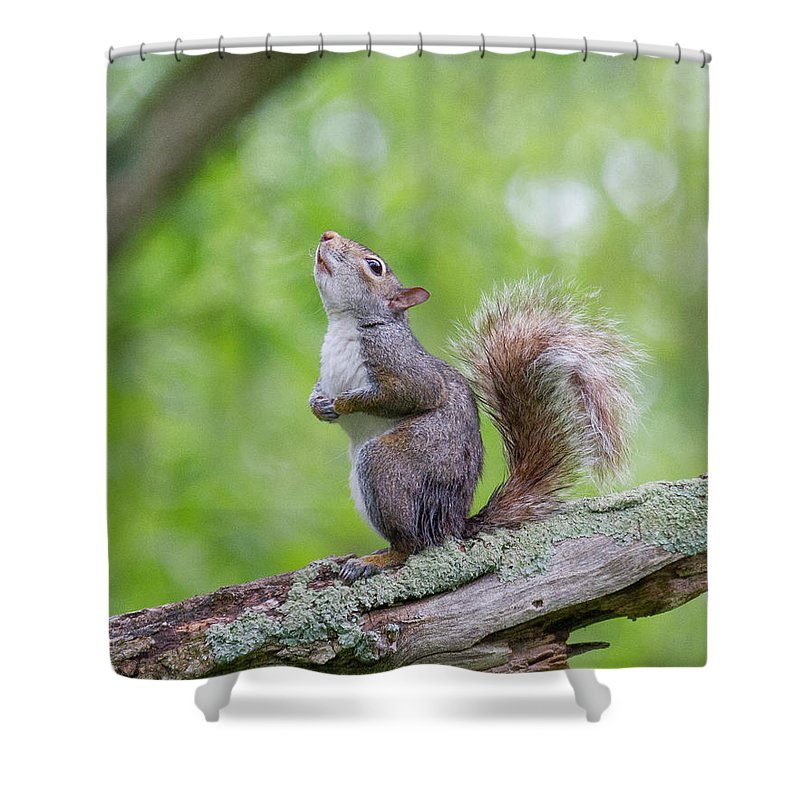 Squirrel Shower Curtain featuring the photograph Hopes And Wishes by Scott Stolsenberg