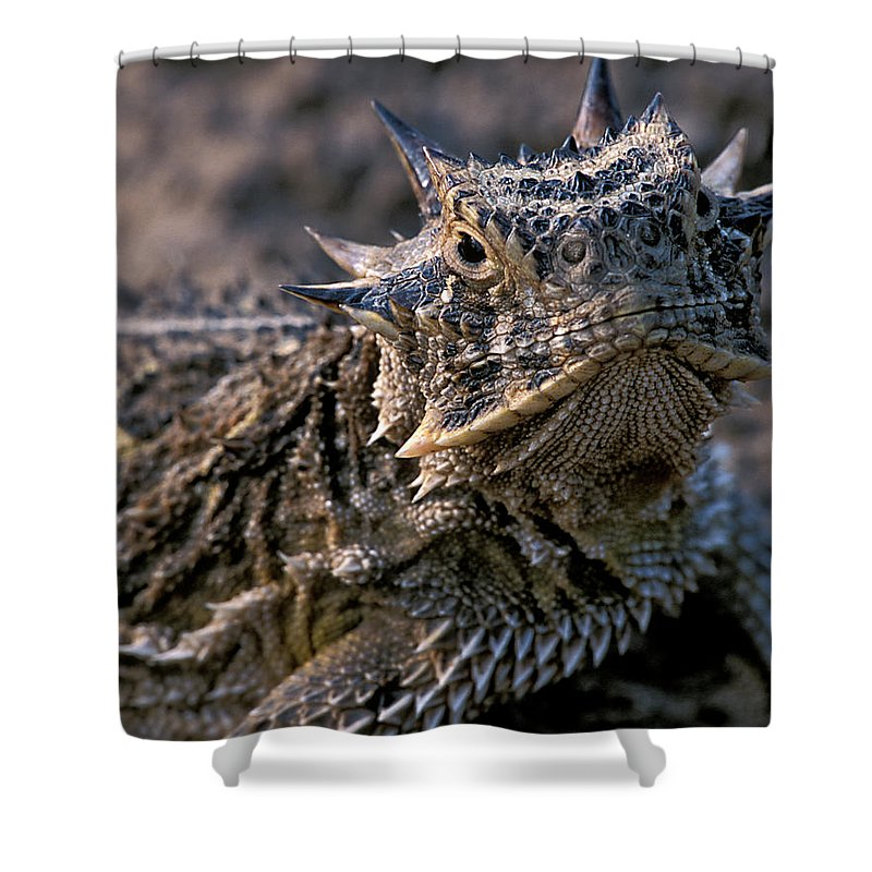 Horn Toad Shower Curtain featuring the photograph Horn Toad by Gary Langley