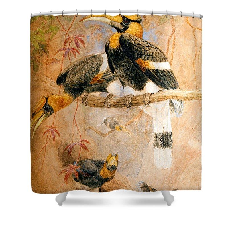 Hornbill Shower Curtains