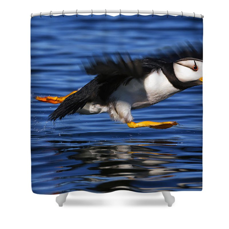Alaska Photographs Shower Curtains