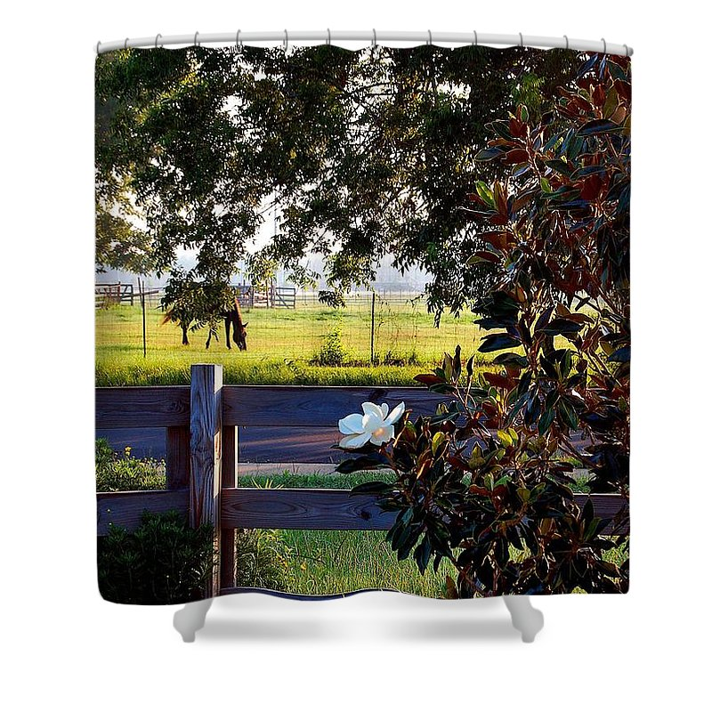 Pelican Shower Curtain featuring the photograph Horse And Flower by Michael Thomas