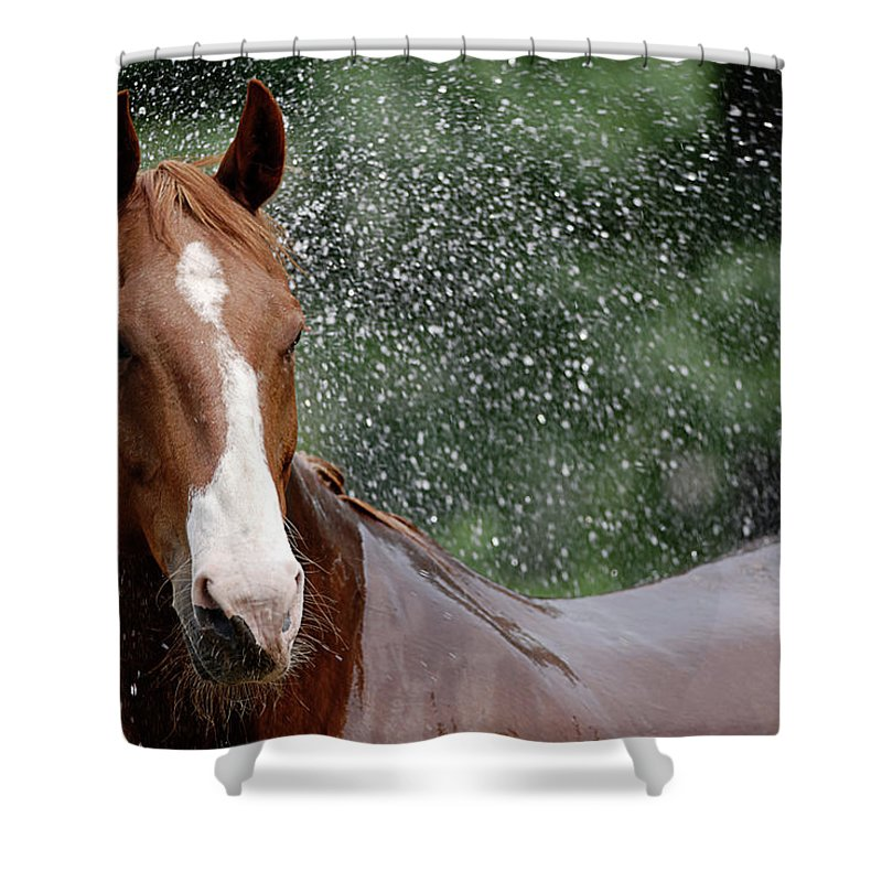 Horse Shower Curtain featuring the photograph Horse Bath I by Julie Niemela