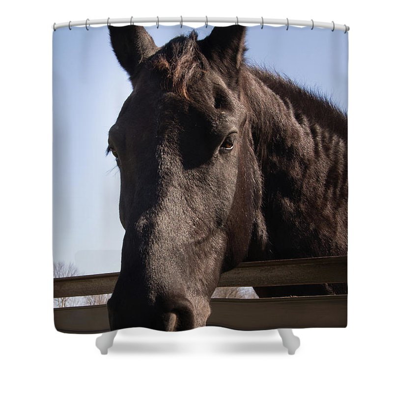 Horse Shower Curtain featuring the photograph Horse By A Fence. by Diane Schuler