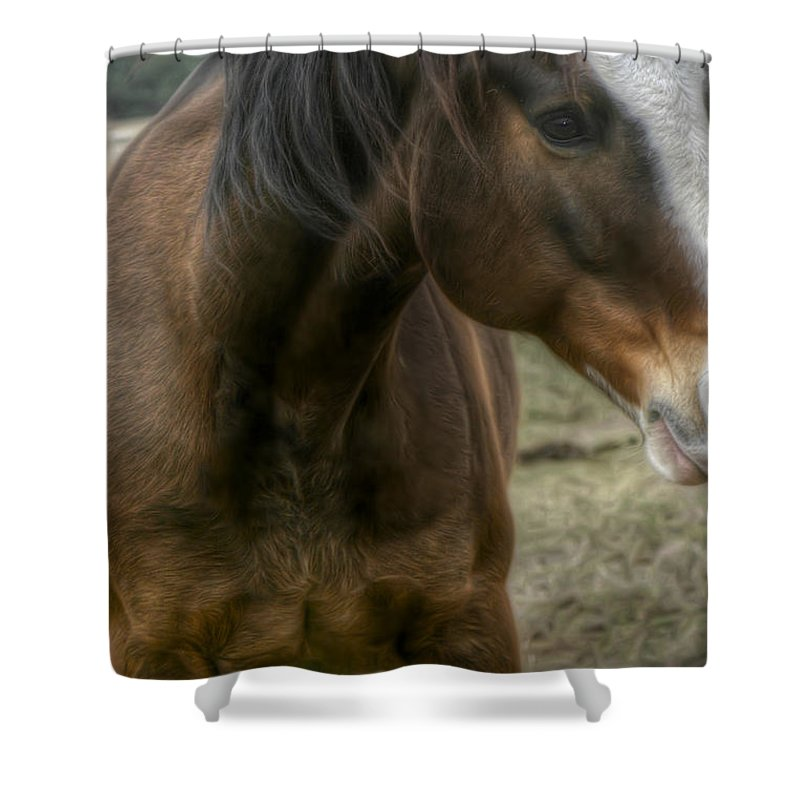 Horse Shower Curtain featuring the photograph Horse by Dolly Sanchez