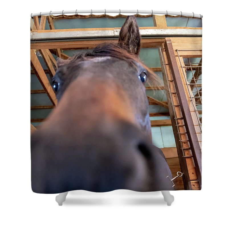 Nose Shower Curtain featuring the photograph Horse Hello by Joseph Caban