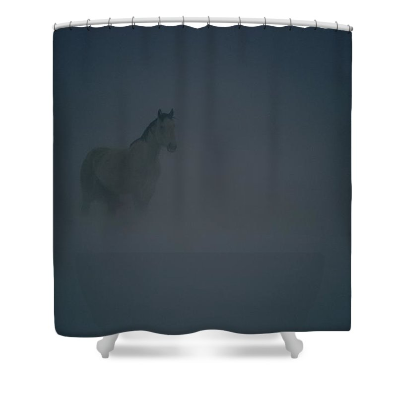 North America Shower Curtain featuring the photograph Horse In A Snowstorm Near Boggs by Paul Chesley
