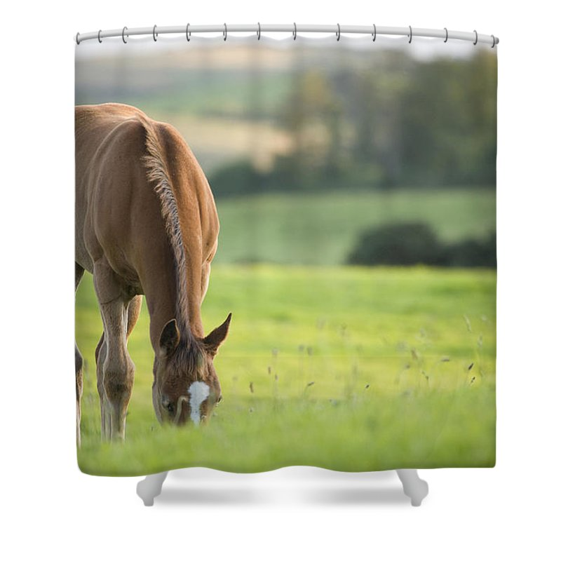 Horse Shower Curtain featuring the photograph Horse In Field Near Ballyvaloo, Blackwater, Wexford by Ian Middleton