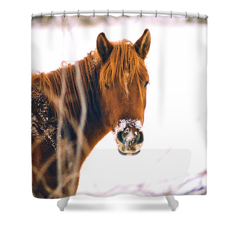 Horse Shower Curtain featuring the photograph Horse In Winter by Steve Karol