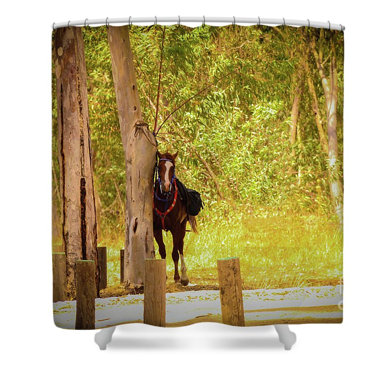 Horse Shower Curtain featuring the photograph Horse by Nadav Cohen