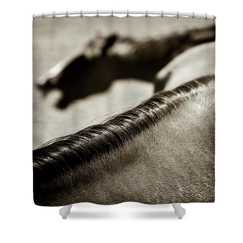 Horses Shower Curtain featuring the photograph Horse Play by Dave Bowman