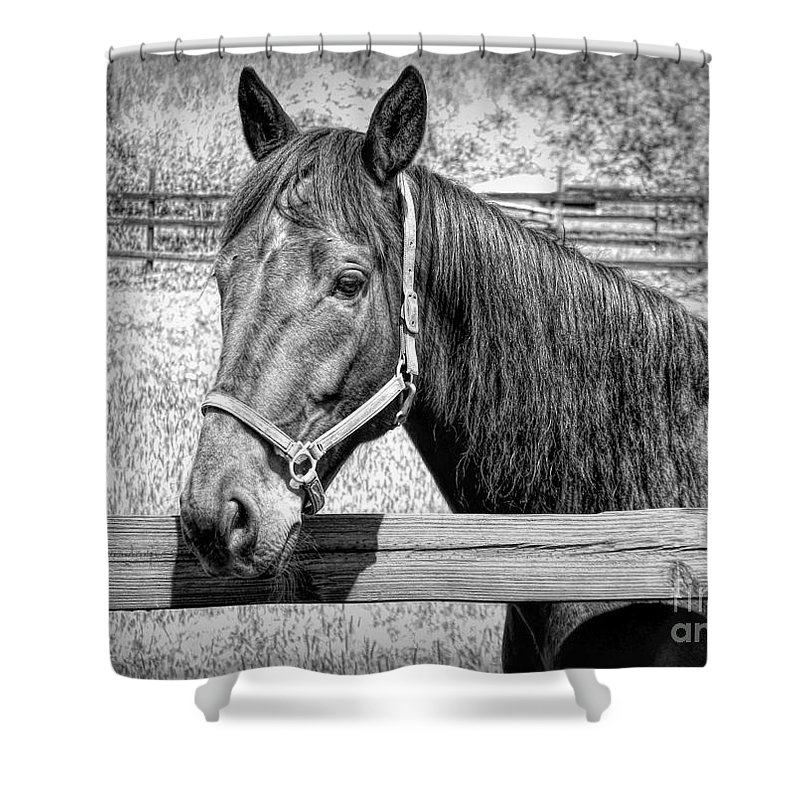 Horse Portrait In Black And White Shower Curtain featuring the photograph Horse Portrait In Black And White by Rose Santuci-Sofranko