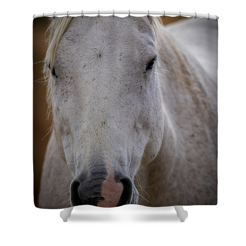 Horse Shower Curtain featuring the photograph Horse Portrait by Scott McKay