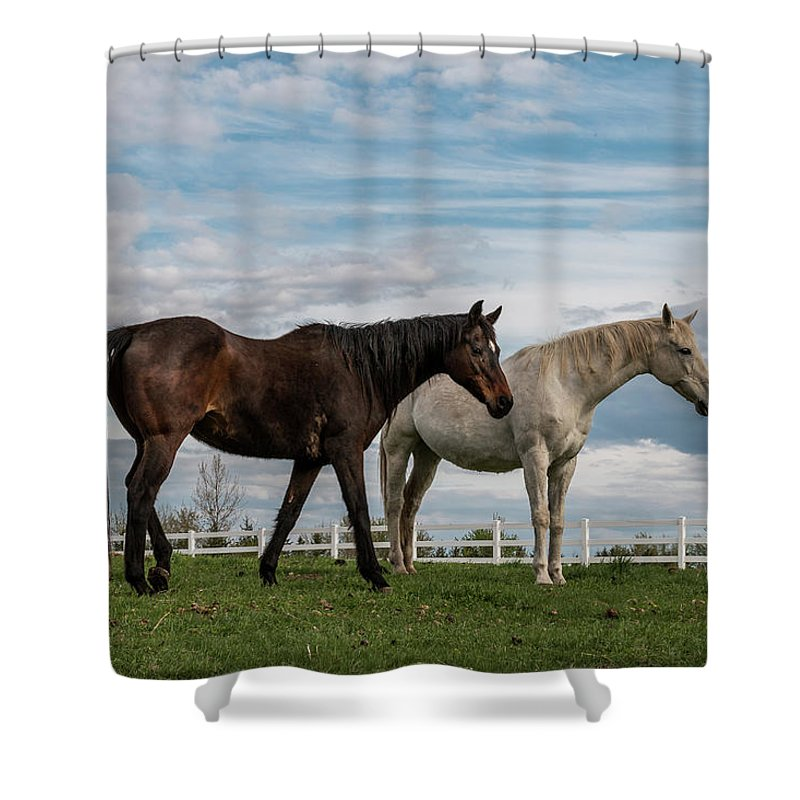 Horse Shower Curtain featuring the photograph Horses #2 by Patti Deters