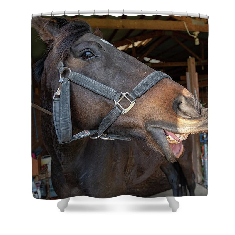 Horse Shower Curtain featuring the photograph Horse Snack by Joseph Caban