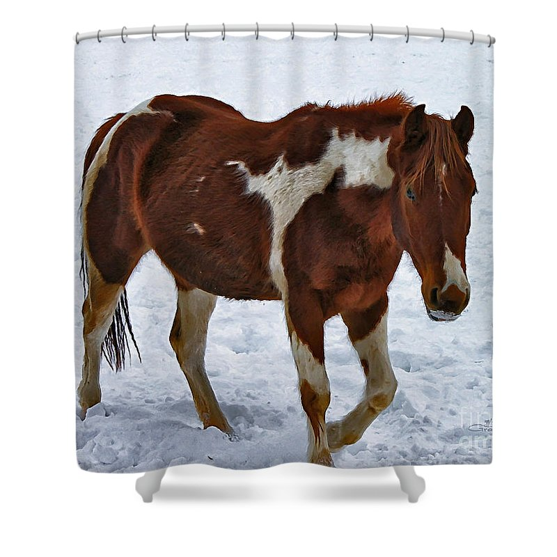 Photo Shower Curtain featuring the photograph Horse With No Name by Jutta Maria Pusl