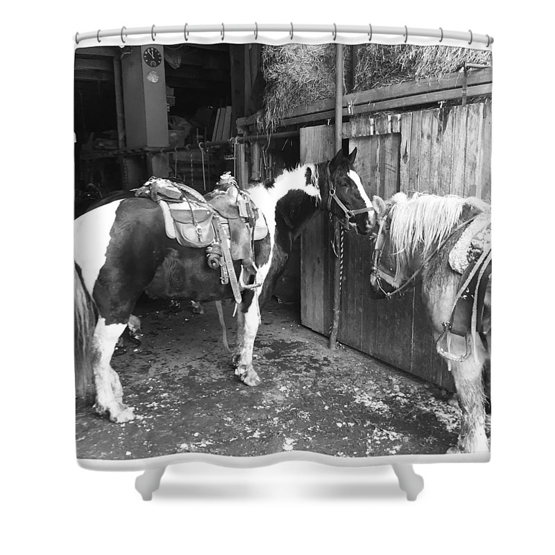 Horses Shower Curtain featuring the photograph Horses In The Barn by Christina McNee-Geiger