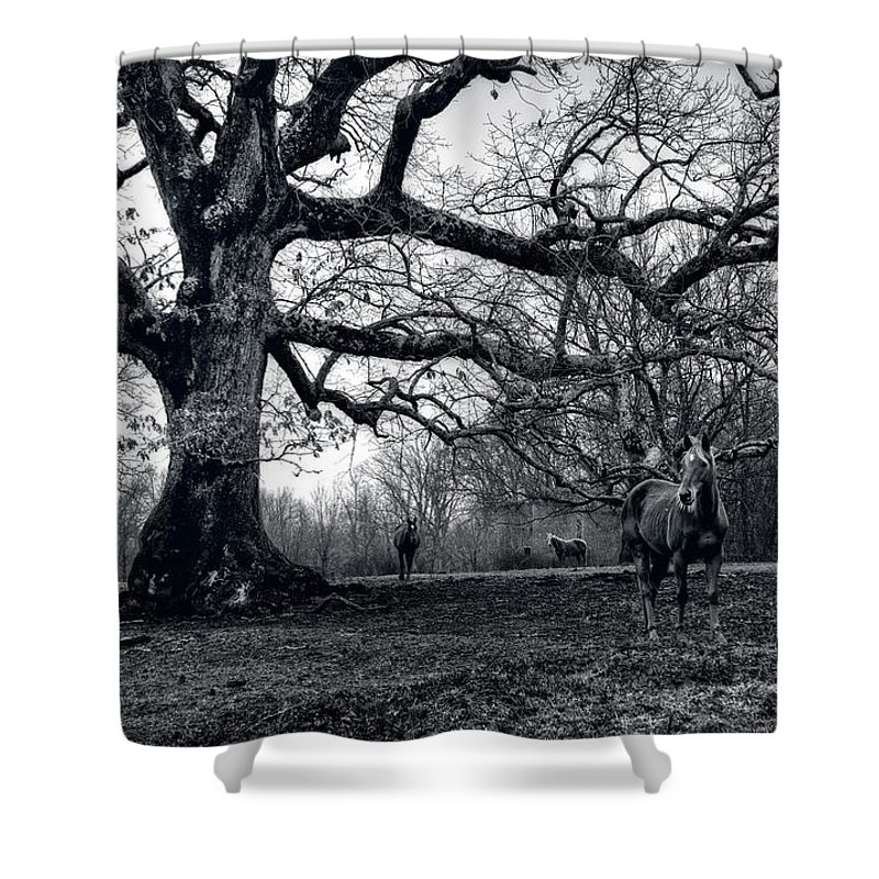 Horses Shower Curtain featuring the photograph Horses On A Foggy Morning In Black And White by Greg and Chrystal Mimbs