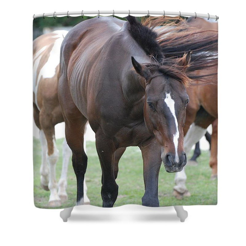 Horses Shower Curtain featuring the photograph Horses by Rob Hans