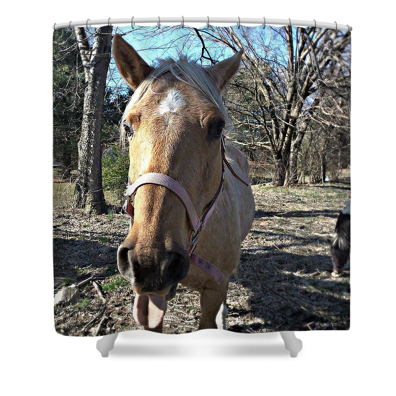 Horse Shower Curtain featuring the photograph Horsin' Around by Cassandra Dice