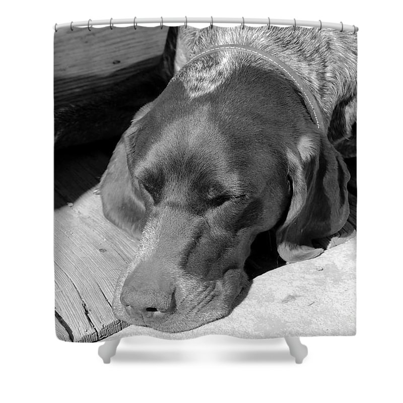 Dog Shower Curtain featuring the photograph Hound Dog by David Lee Thompson