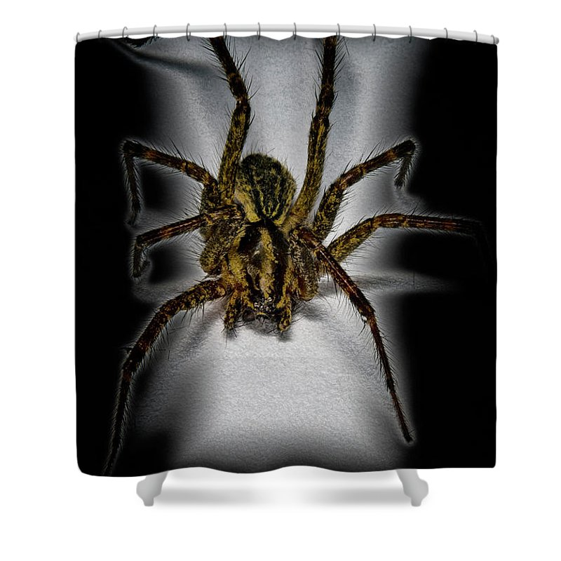 Macro Shower Curtain featuring the photograph House Spider by Robert Storost
