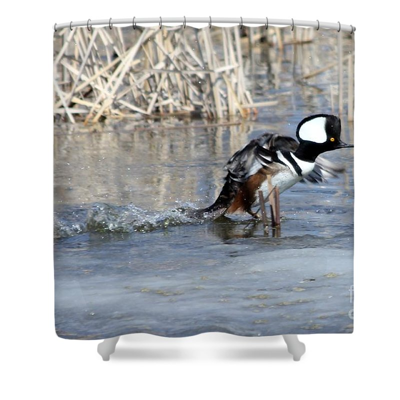 Hodded Shower Curtain featuring the photograph How About A Danece by Lori Tordsen