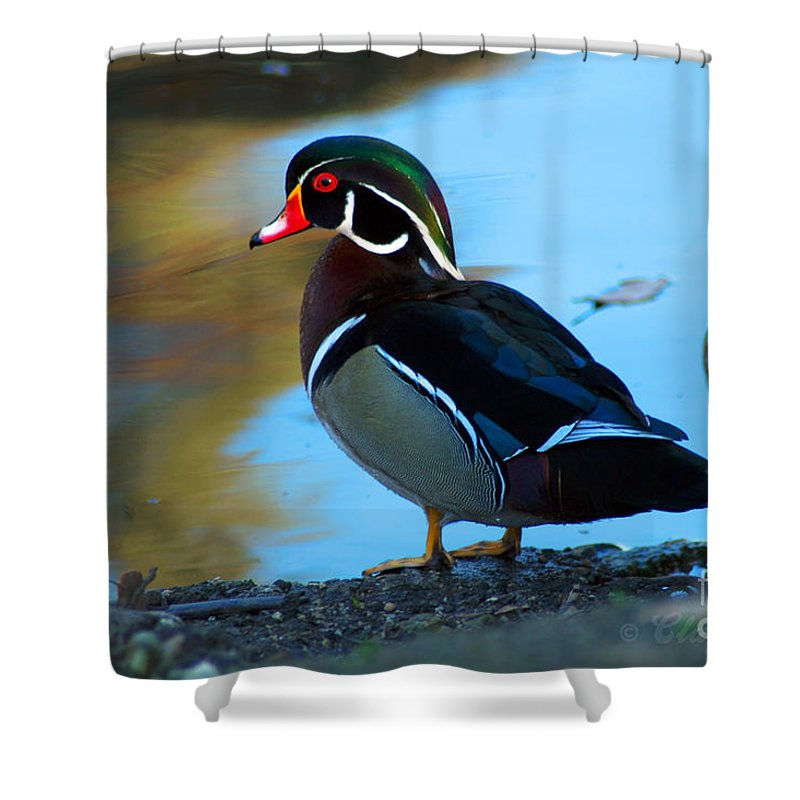 Clay Shower Curtain featuring the photograph How Much Wood Could A Wood Duck Chuck by Clayton Bruster