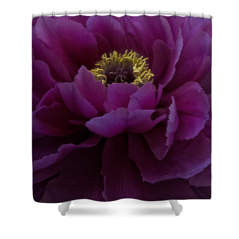 Flower Shower Curtain featuring the photograph Huge Magenta Peony by Chris Lord